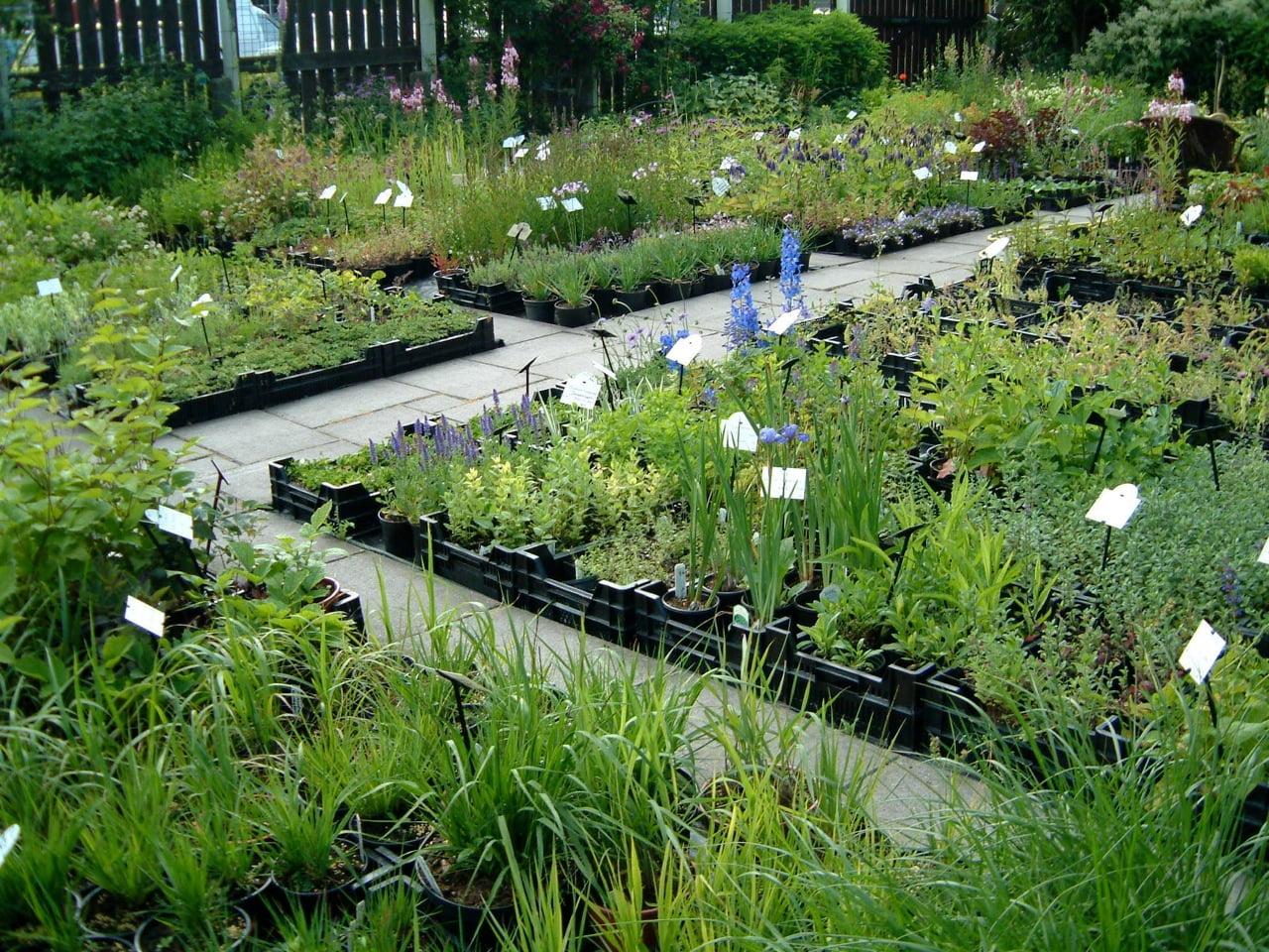 Kwekerij Liefhebbersplanten in juni