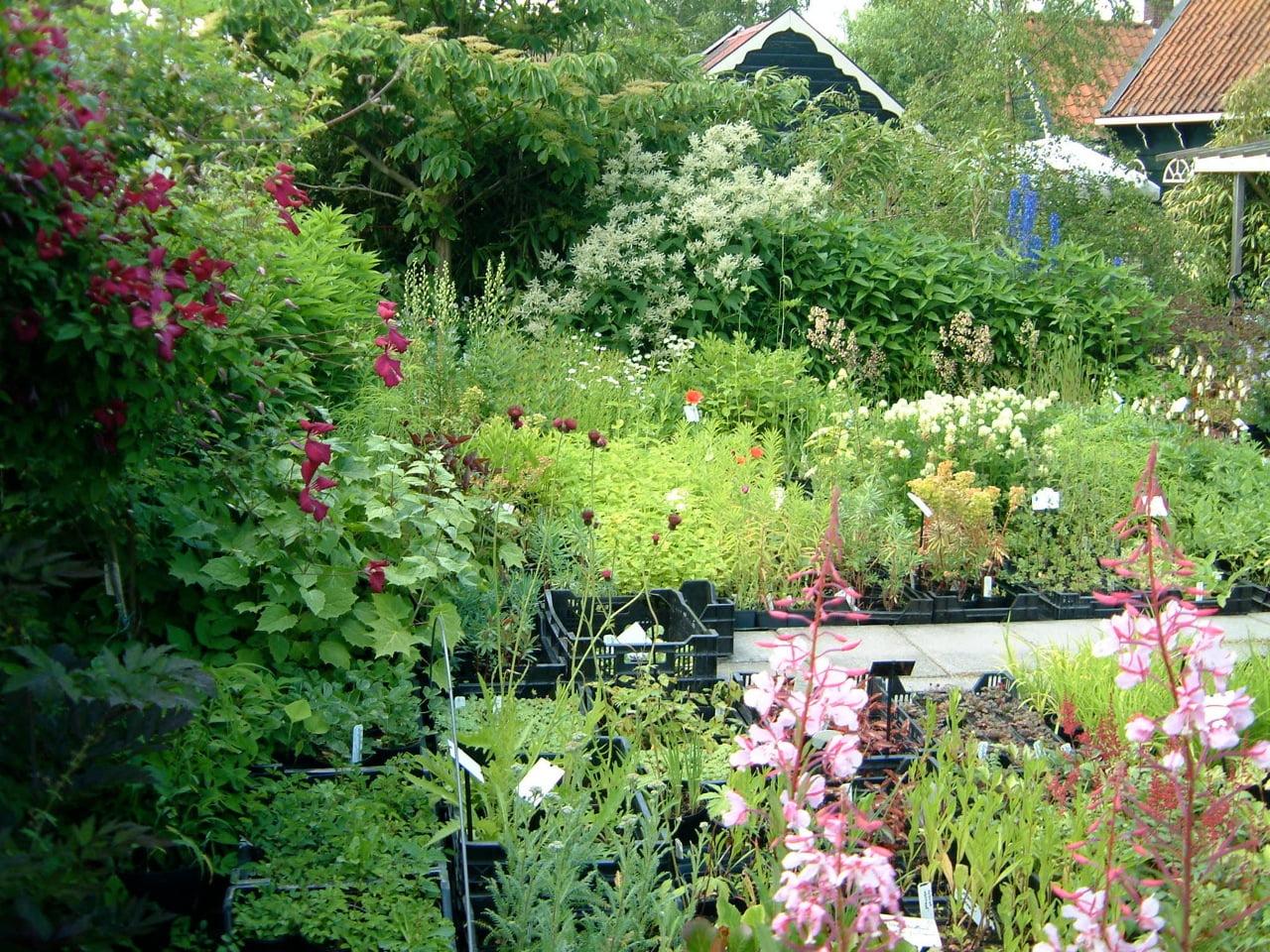 Kwekerij Liefhebbersplanten in juli